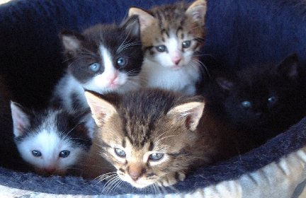 Poly Kittens