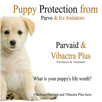 Buy Parvaid & Vibactra Plus for natural effective parvo prevention & parvo treatment!  Buy Parvaid now for happy healthy puppies!